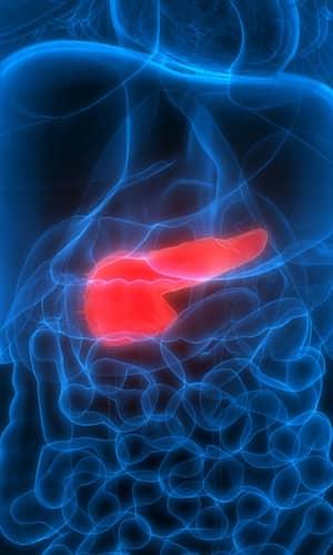 Evolution of the Pancreas