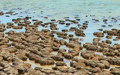 Using Stromatolites to Rethink the  Precambrian-Cambrian Pre-Flood/Flood Boundary